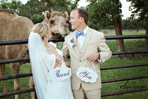 classic oaks ranch, swan photography, rustic wedding, affordable DFW photographer, camels